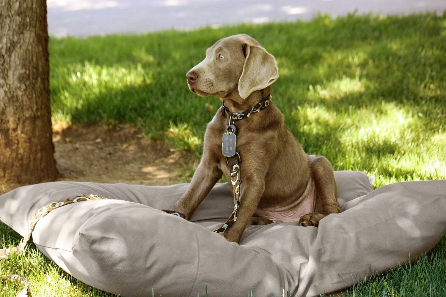 Dog Bed Cover