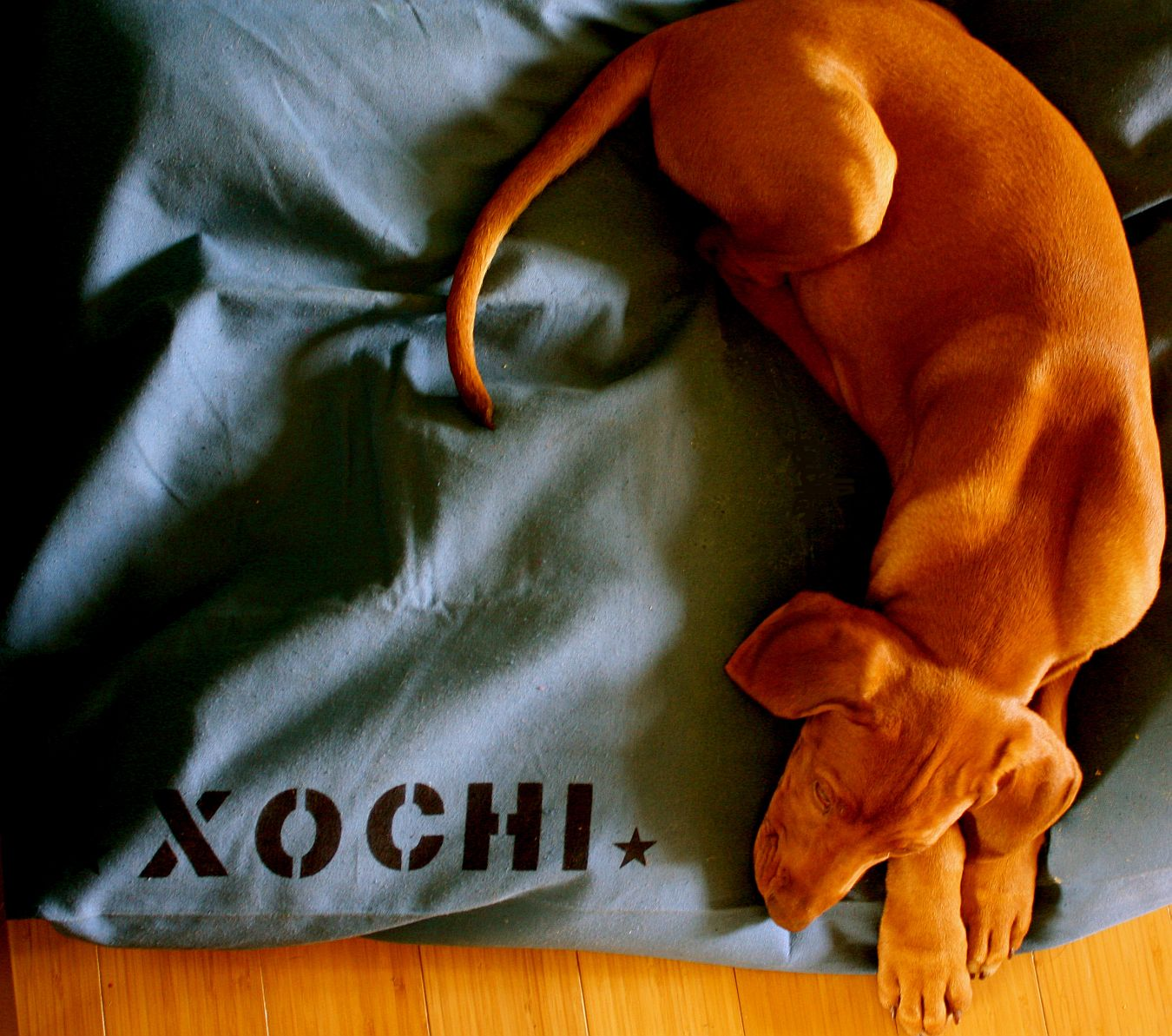 Bow Wow Dog Bed Covers