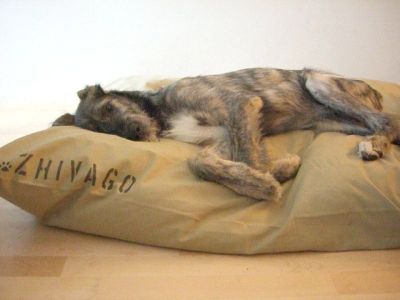 Canvas Dog Bed Covers Small Huge Custom Personalize It